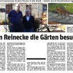 Wenn Reinecke Fuchs die Gärten besucht